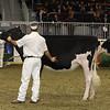 Royal16_Holstein_21M9A0058