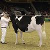 Royal16_Holstein_21M9A0064