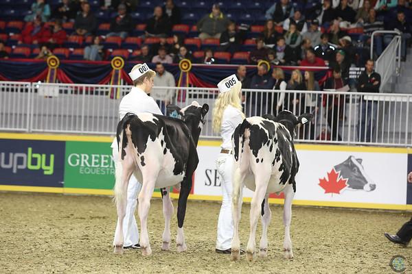 Royal16_Holstein_L32A4118