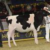 Royal16_Holstein_21M9A0310