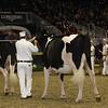 Royal16_Holstein_21M9A0005