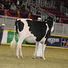 Royal16_Holstein_21M9A0207