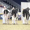 Royal16_Holstein_L32A3889