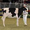 Royal16_Holstein_21M9A0305