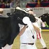Royal16_Holstein_L32A4060