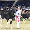 Royal16_Holstein_L32A3918