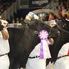 Royal16_Holstein_21M9A0357