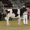 Royal16_Holstein_21M9A0316