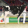 Royal16_Holstein_L32A4081