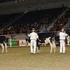 Royal16_Holstein_21M9A0050