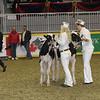 Royal16_Holstein_21M9A0266