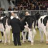 Royal16_Holstein_21M9A0156