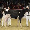 Royal16_Holstein_1M9A9992