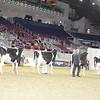 Royal16_Holstein_21M9A0199