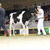Royal16_Holstein_L32A3933