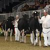 Royal16_Holstein_21M9A0025