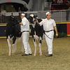 Royal16_Holstein_21M9A0281