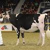 Royal16_Holstein_21M9A0122