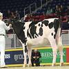 Royal16_Holstein_L32A4141