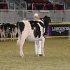 Royal16_Holstein_21M9A0307
