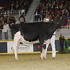 Royal16_Holstein_21M9A0320