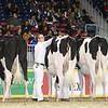 Royal16_Holstein_L32A4100