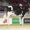 Royal16_Holstein_L32A4080