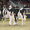 Royal16_Holstein_L32A4116