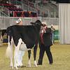 Royal16_Holstein_21M9A0334
