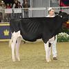 Royal16_Holstein_21M9A0325