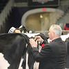 Royal16_Holstein_21M9A0134