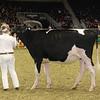 Royal16_Holstein_21M9A0069