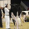 Royal16_Holstein_1M9A9934