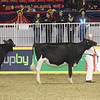Royal16_Holstein_1M9A9930
