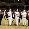 Royal16_Holstein_21M9A0370