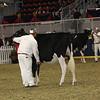Royal16_Holstein_21M9A0047