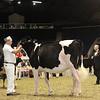 Royal16_Holstein_1M9A9926