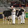 Royal16_Holstein_21M9A0277
