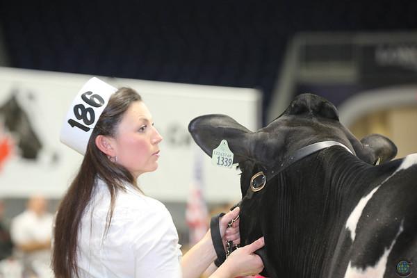 Royal16_Holstein_L32A3875