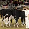 Royal16_Holstein_21M9A0225