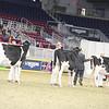 Royal16_Holstein_21M9A0200