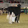 Royal16_Holstein_21M9A0338