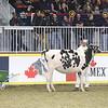 Royal16_Holstein_1M9A9927