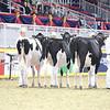 Royal16_Holstein_L32A3891