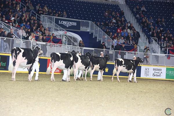 Royal16_Holstein_L32A4042