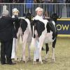 Royal16_Holstein_L32A4129