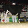 Royal16_Holstein_L32A4023