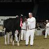 Royal16_Holstein_L32A4003