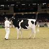 Royal16_Holstein_21M9A0086