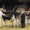 Royal16_Holstein_21M9A0133